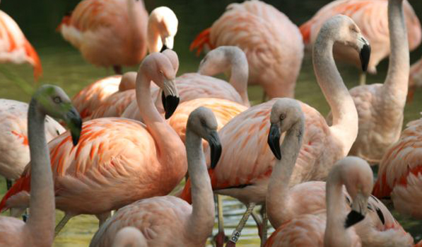 Flamingo Durrell Crop