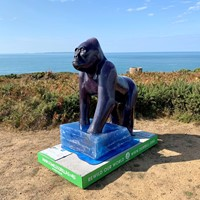 Jersey Goes Wild for Gorillas